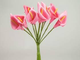 Arum - Fuchsia